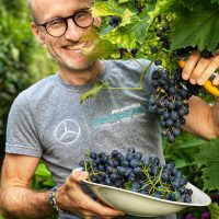 Fast Harvest at Casa Curtius